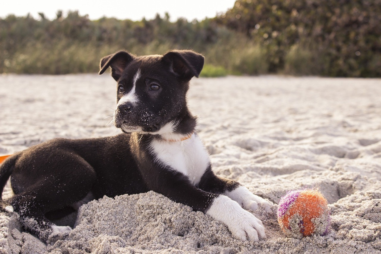 Behawiorysta, psi psycholog, szkolenia psów, tresura psa