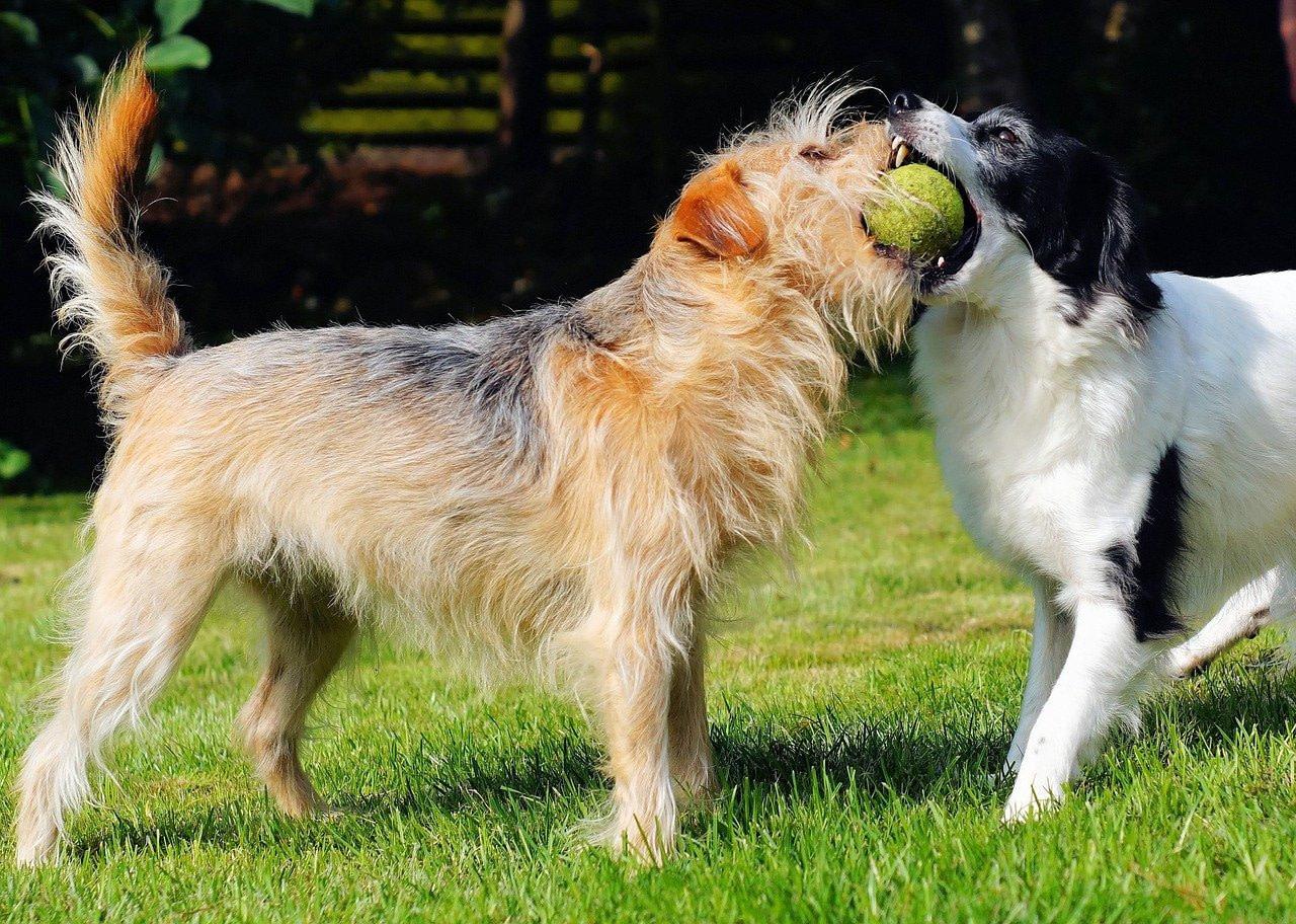 szkola dla psów