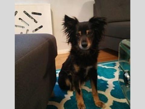 Praca z lękliwym psem po adopcji - behawiorysta w Oświęcimiu