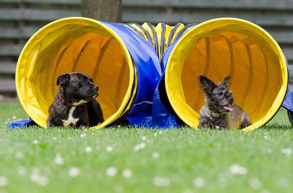 szkolenia grupowe psów